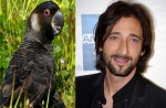 Parrot = Adrien Brody
