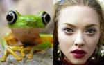 Frog = Amanda Seyfried
