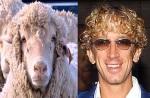 Sheep = Andy Dick
