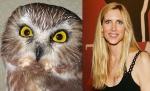 suspicious Owl = Ann Coulter
