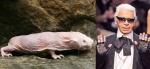 Naked Mole Rat = Karl Lagerfeld