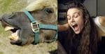 Donkey = Keira Knightley