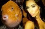 Fish = Kim Kardashian