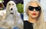 Afghan = Lady Gaga