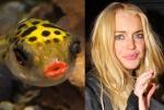Fish = Lindsay Lohan
