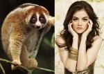 Pygmy Loris = Lucy Hale