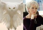 Snowy Owl = Meryl Streep