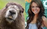 Beaver = Miley Cyrus