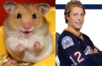 hockey player Robert Nilsson = hamster