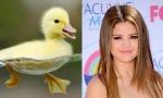 Duckling = Selena Gomez