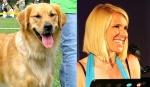 Golden Retriever = news anchor Stephanie Kralevich