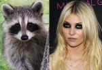 Raccoon = Taylor Momsen