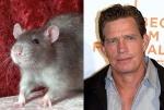 Rat = Thomas Haden Church