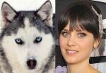 Siberian Husky = Zooey Deschanel