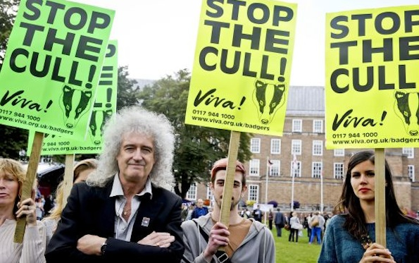 Proposed badger cull