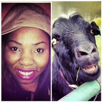 Rihanna fan goat