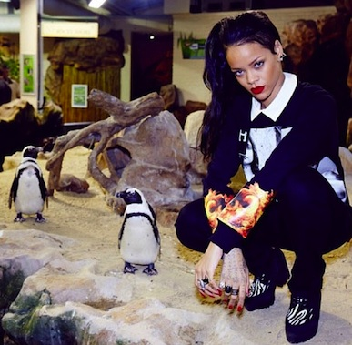 Rihanna penguins