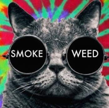cat smoking weed
