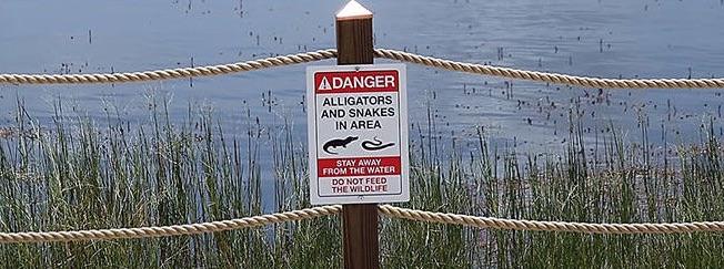 disney world alligator sign